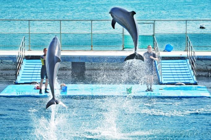 Шоу дельфинов в парке Винперл Нячанг
