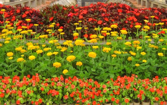 Парк цветов в Далате, Вьетнам