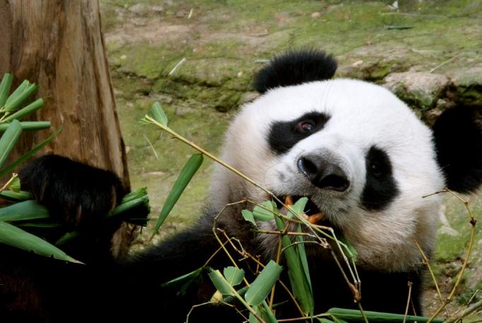 Зоопарк Чиангмая Таиланд