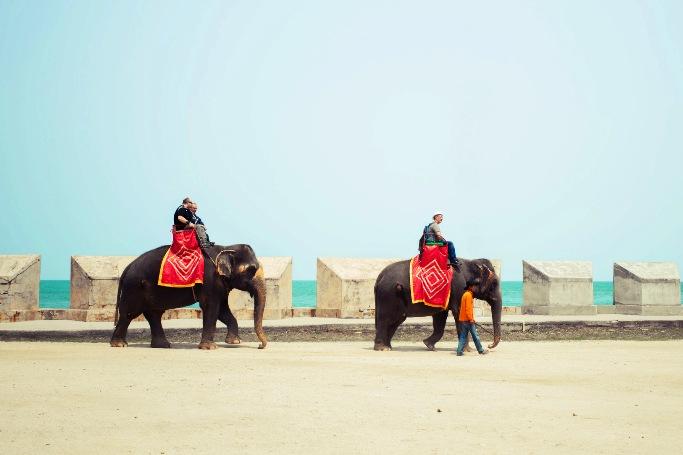 Деревня слонов неподалеку от Паттайи