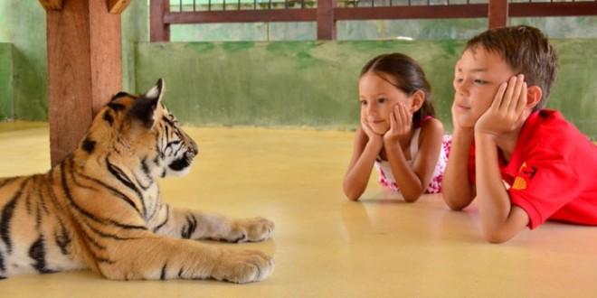 Отдых на Пхукете с детьми - отели, пляжи, отзывы туристов