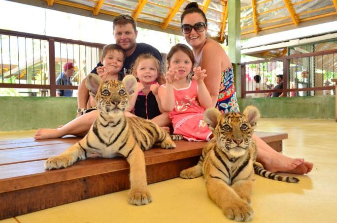 Что посмотреть с детьми на Пхукете, Тайланд - Королевство тигров