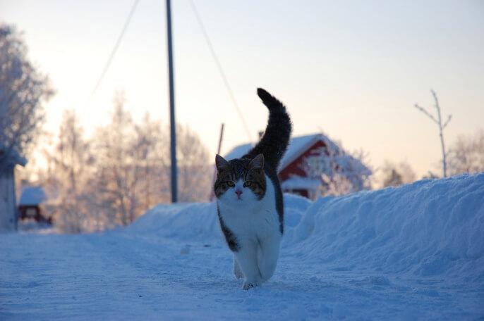Отдых на Новый год куда поехать недорого в России