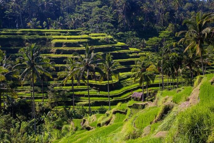 Достопримечательности Бали фото и описание