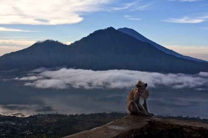 Бали отзывы туристов об экскурсиях 2019